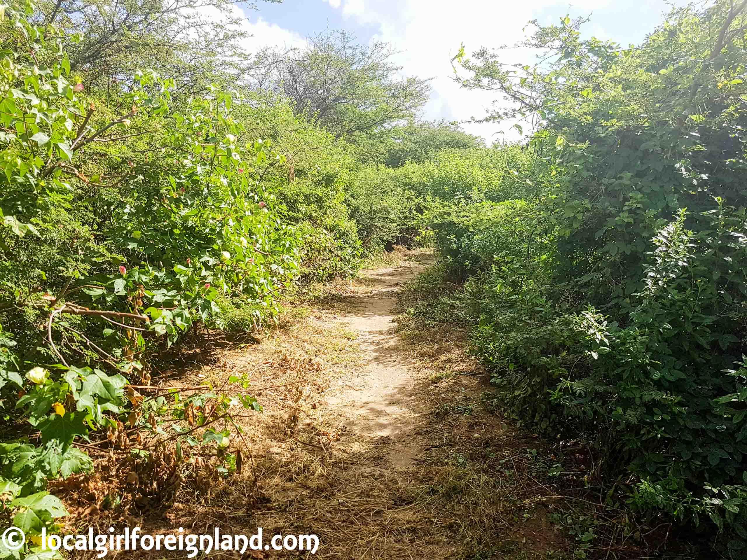 Anse à la Gourde, Pointe des Châteaux Hike, Guadeloupe